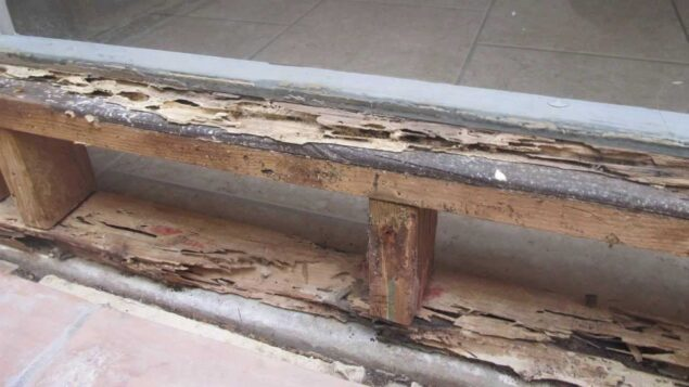 Drywood termite frass Pictures, Meaning, Look like, Droppings, Prevention