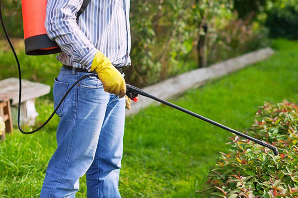 When is the best time to do pest control?
