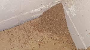 Carpenter ant frass vs Termite frass Identification, Treatment