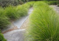 Lomandra Breeze Grass Spacing, Pruning, Care, Height, Size